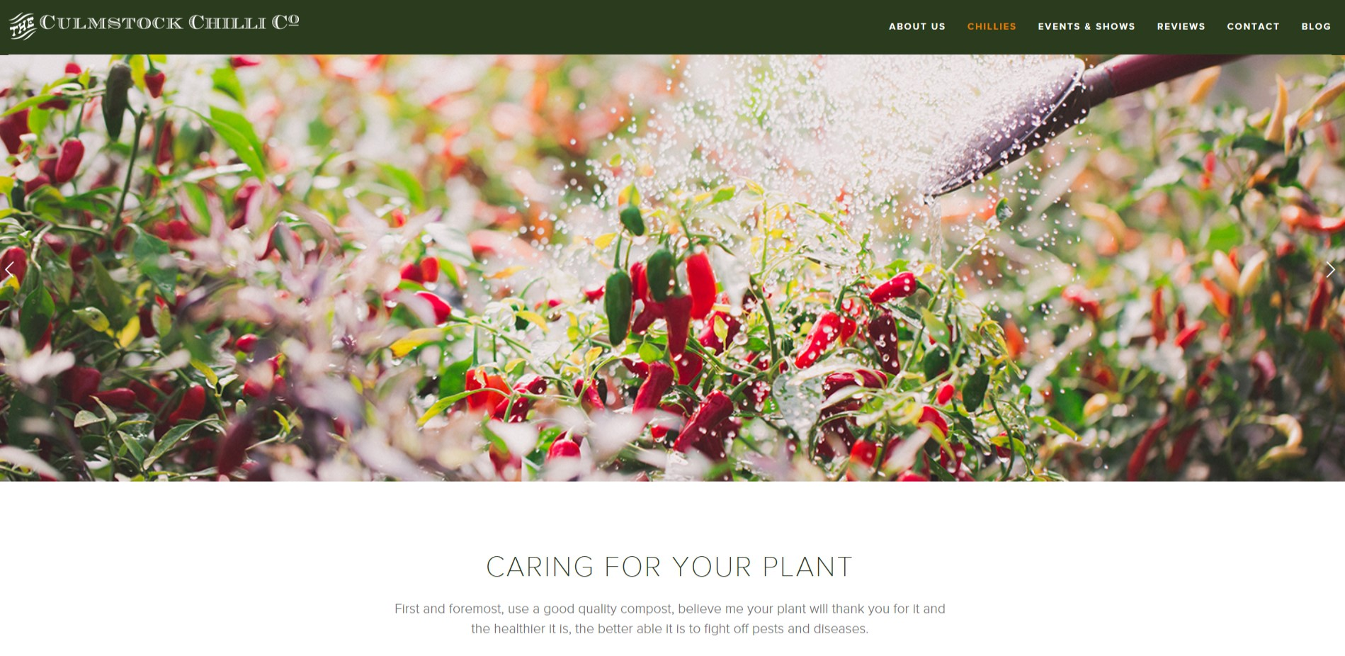 Screen shot of the Caring for your plant page on the Culmstock Chilli Co Website, commercial shoot by Perspectives Photography